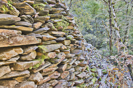 Stone wall in the forest photo