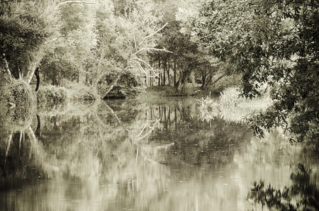 A silent place deep in the woods photo