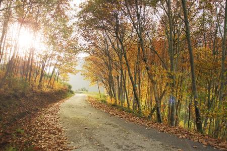 Fall foliage in the Caurel Mountains, Galicia photo