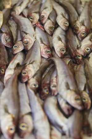 fish vendor: fresh fish at the market