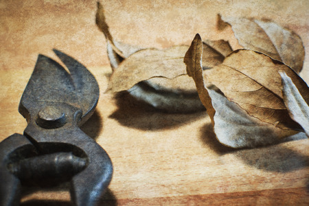 generic location: Old and rusty garden scissors on  wood background