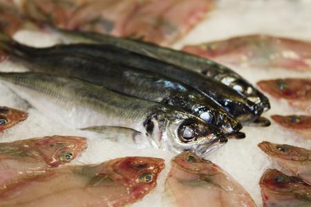 fresh fish at the market photo