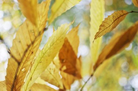 Defocused in the autumn sun lights. photo