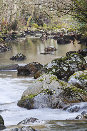 forest stream: Forest stream running over mossy rocks Stock Photo