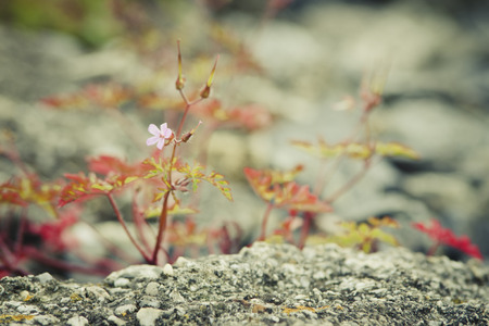 weed block: Flowers rising from cement structure. Stock Photo