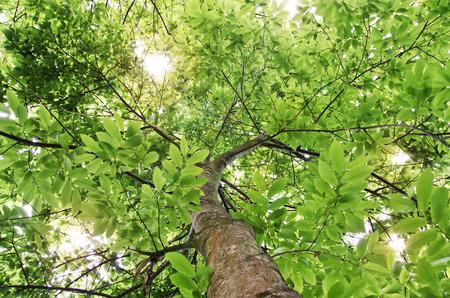 definite: Green Tree Looking up
