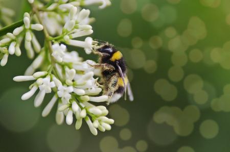 definite: Bee on the white flower