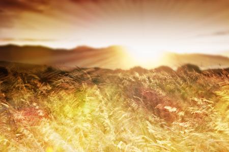definite: Field landscape at sunset.