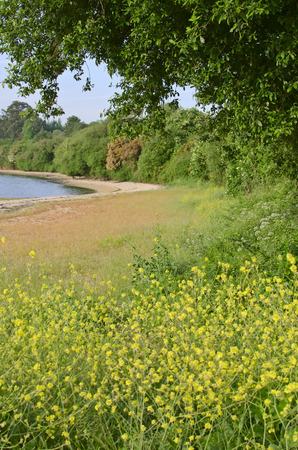 definite: landscape with yellow flowers in the foreground Stock Photo