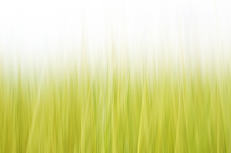 definite: Abstract nature background of green grass. Stock Photo