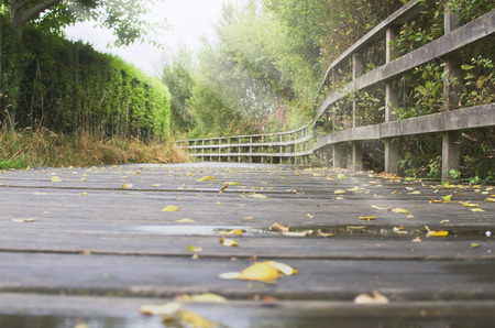 elevated walkway: Wooden path at morning in Galicia. Stock Photo