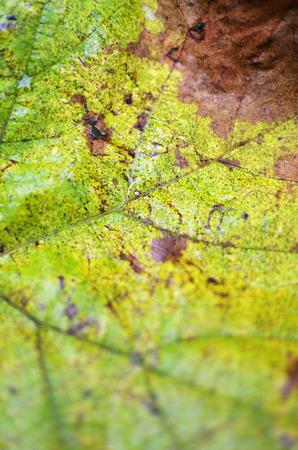 color photographs: closeup of a green leaf