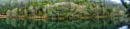 purl: mountain stream running over mossy rocks