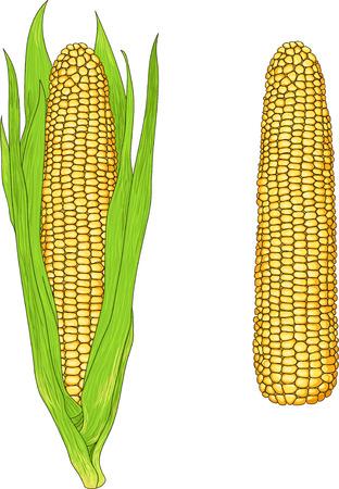 husk: Fresh corn