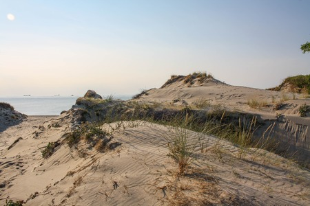 white sand: Beautiful white sand dune and tree over Baltic sea in the summer, landscape.