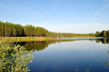 Lake in a pine forest  Stock Photo