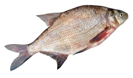 daurade: La br�me commune, br�me d'eau douce, la br�me, la br�me ou la carpe en bronze br�me, Abramis brama, est une des esp�ces europ�ennes de poissons d'eau douce dans le Cyprinidae famille. Banque d'images