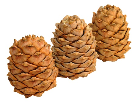 siberian pine: Three dried ripe cones of Siberian pine on a white background Stock Photo