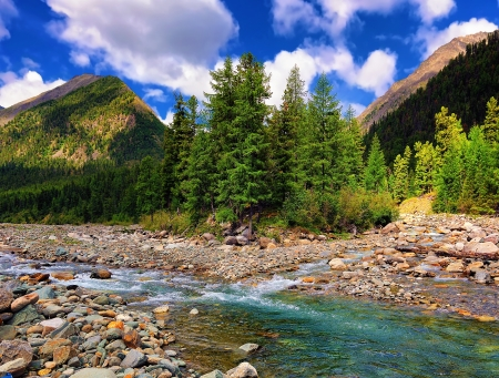 A small group of larches on the banks of a mountain river. Shumak river. Eastern Sayan. Republic of Buryatia Stock Photo - 15150811