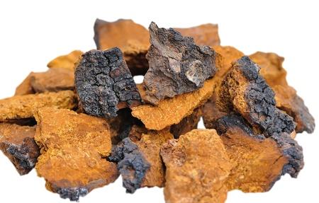 Pieces of Inonotus obliquus. Herbal medicine traditional medicine