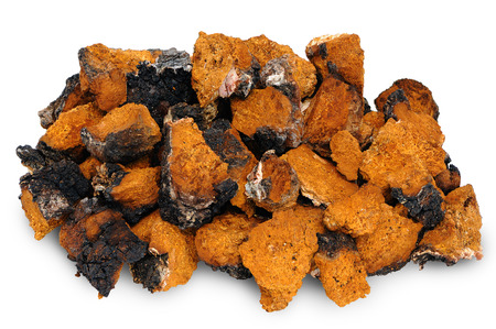 Chaga - birch mushroom. Chopped dried slices on white background Stock Photo