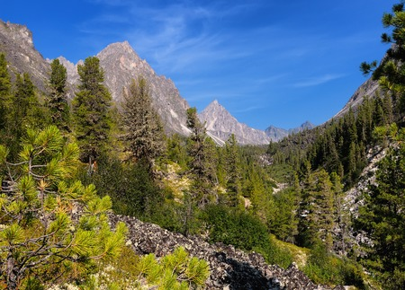 Mountain forest.  Valley Barun-Handagaya. Sayan mountains. Tunka ridge. Republic of Buryatia Stockfoto
