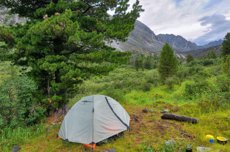 Camping tent under Siberian Pine. Mountain Valley