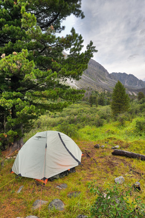 siberian pine: Double lightweight sports tent under a large Siberian pine in a mountain valley Stock Photo