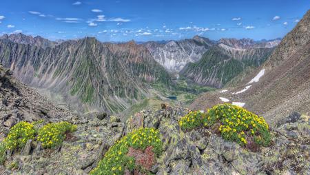 tunka range: Yellow flowers (Potentilla biflora) on a background of mountain ranges. Eastern Sayan. The Republic Of Buryatia Stock Photo