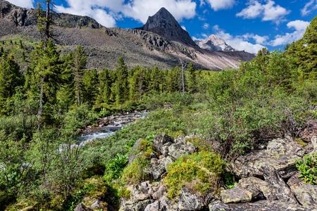 tunka range: A narrow strip of wood at a mountain river. Eastern Sayan. Republic of Buryatia