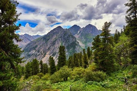tunka range: Dark coniferous taiga. Woodland scenery. Eastern Sayan Mountains Siberia