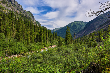 tunka range: Shrubs near a stream in the mountains of Eastern Siberia. East Sayan