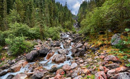 tunka range: Mountain stream running in the narrow forest gorge. Eastern Siberia