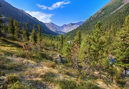 tunka range: Siberian mountain woodlands summer morning . Eastern Sayan . Buryatia