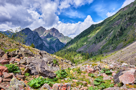 primordial: Mountain landscape with wild rhubarb . Primordial nature of Eastern Siberia . Russia Stock Photo