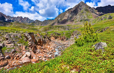 tunka range: Mountain river in a canyon and green carpet of rhododendron on a slope . Eastern Siberia