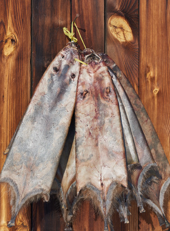 skins: Raw fur skins . Skins muskrat (Ondatra)