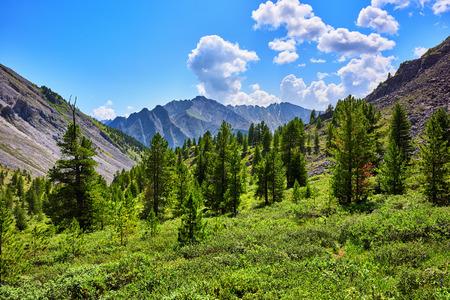 tunka range: Coniferous trees in mountains on border of forest . Eastern Sayan . Buryatia Stock Photo