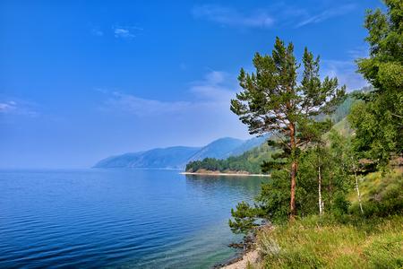 Pine tree on edge of steep bank of Lake Baikal. Irkutsk region. Russia