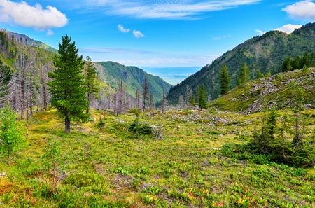 tunka range: Quiet path between leaves of Bergenia in highlands. East Siberia. Russia Stock Photo