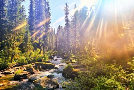 Beautiful sunlight in Siberian mountain forest. Dark coniferous taiga. Nature Park Ergaki. Russia Stock Photo