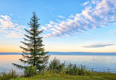 Sonnenaufgang auf dem Baikalsee . Junge Lärche wächst am Ufer des Ufers . Nationalpark . Salzburger Gebiet . Russland