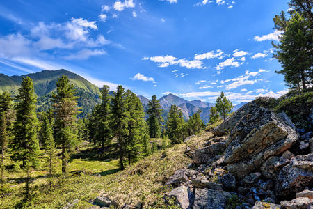 Mountainous territory. Siberian rare taiga on a summer day. Russia Stock Photo