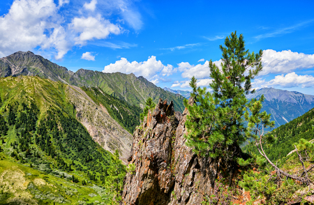 Small Siberian pine grows on top of cliff above precipice. July is a sunny day. Sayan Mountains. Russia Stock Photo