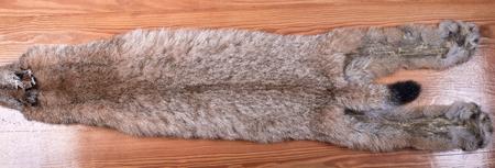 Fur skins of Siberian lynx on wooden background. Not dressed. Average size