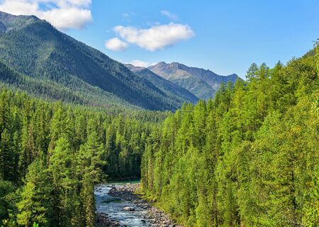 Subalpine coniferous taiga in Siberian mountains. Deep forest and a narrow bed of a bubbling rivulet. Sayan mountains. Russia