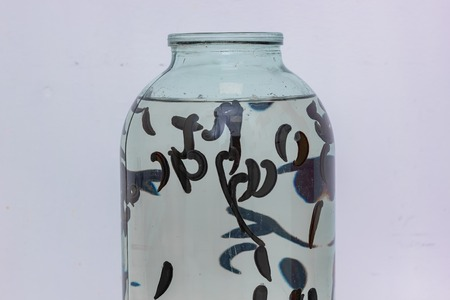many leeches in the water stuck to the glass jar, close-up Stock Photo