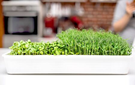 micro grass close-up, healthy eating, pea sprouts and sunflower seeds, micro grass in the kitchen in the tray Archivio Fotografico