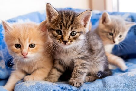 Striped, red, gray little adorable kittens look at the camera, close-up and soft focus
