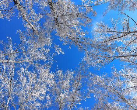 Winter forest on a blue sky background.